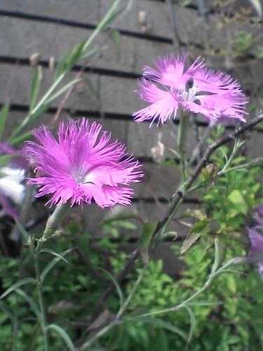 花の名前は知らぬれど